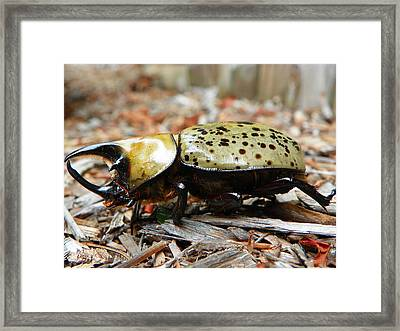 Framed Print featuring the photograph Rhino Resting by Chad and Stacey Hall