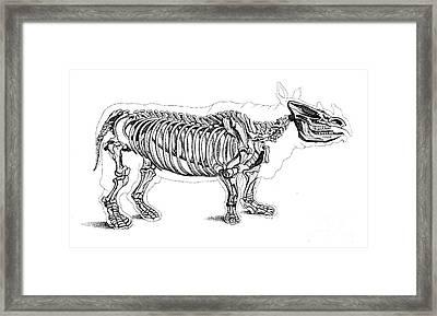 Rhinoceros, Extant Cenozoic Mammal Framed Print