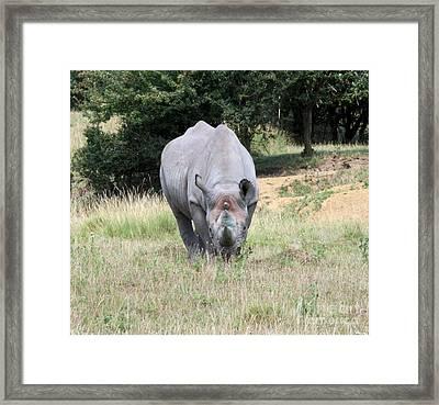 Rhinocerous 13 Framed Print by Ruth Hallam