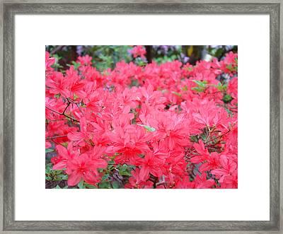 Rhodies Art Prints Pink Rhododendrons Floral Framed Print