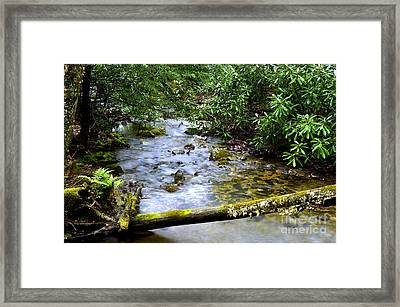 Rhododendron And Mountain Stream Framed Print by Thomas R Fletcher