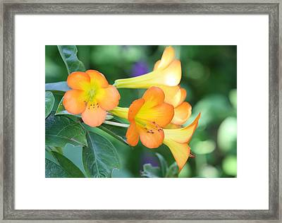 Rhododendron  Framed Print by Andrea  OConnell