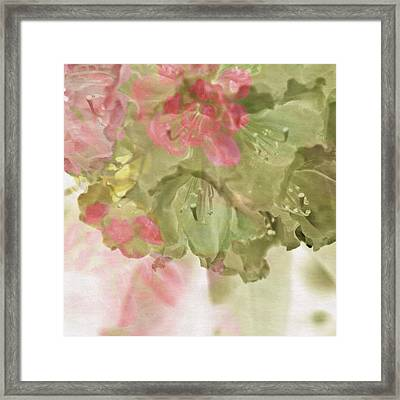 Rhododendron  Framed Print by Bonnie Bruno