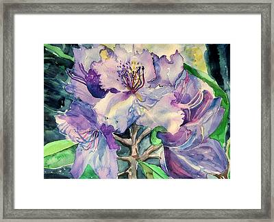 Rhododendron Framed Print by Mindy Newman