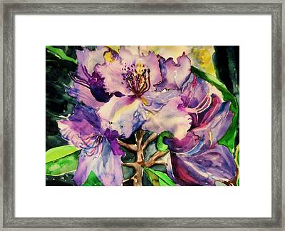 Rhododendron Violet Framed Print by Mindy Newman