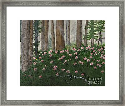 Rhododendrons And Redwoods Framed Print