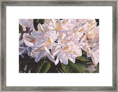 Rhody In The Morning Sun Framed Print by Sharon Freeman