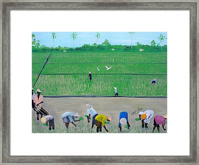 Rice Field Haiti 1980 Framed Print by Nicole Jean-Louis