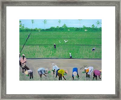 Rice Field Haiti 1980 Framed Print