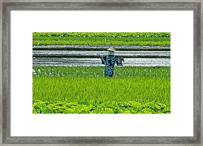 Rice Field - Okinawa Framed Print by Jocelyn Kahawai