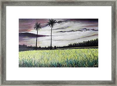 Rice Field  Framed Print by Usha Rai
