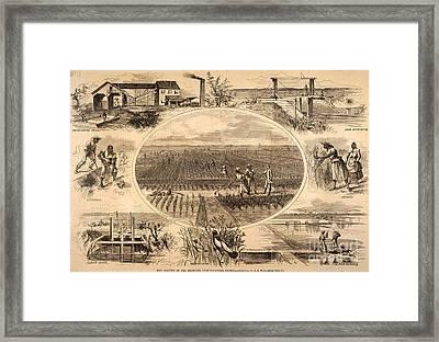 Rice Plantation, 1866 Framed Print