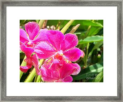 Rich Balinese Orchids Framed Print by Samantha Mills