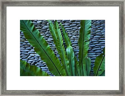 Rich Green Fern Leaves Against A Wall Framed Print