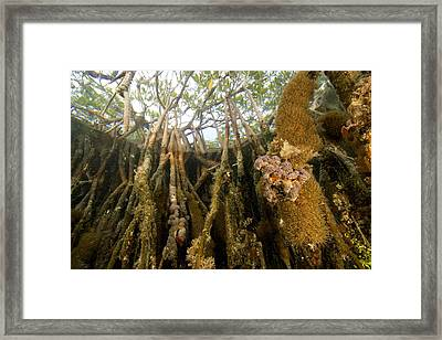 Rich Invertebrate Life Growing Framed Print by Tim Laman