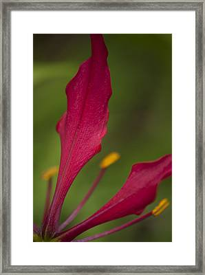 Rich Petals Framed Print
