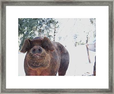 Ricky Framed Print by Samantha Howell