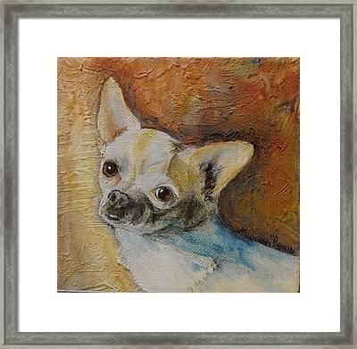 Rico Blue Chihuahua Framed Print