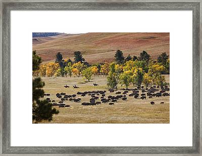 Riders Turning The Herd Framed Print