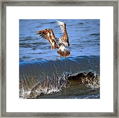 Riding The Wave  Framed Print by Debra  Miller