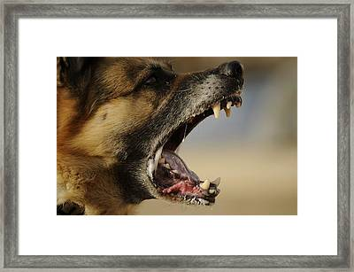 Riko A Us Army Working Dog Barks Framed Print