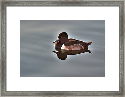 Framed Print featuring the photograph Ring-necked Duck by Tam Ryan