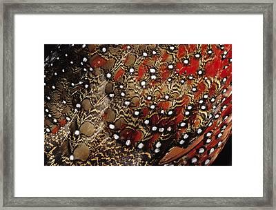 Ring-necked Pheasant Phasianus Framed Print by Jan Van Arkel