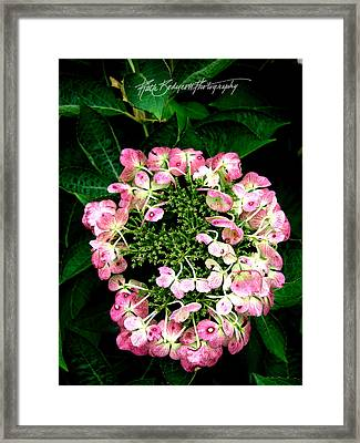 Ring Of Pink Framed Print by Ruth Bodycott