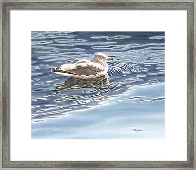 Ringed Bill Gull Framed Print by Richard De Wolfe
