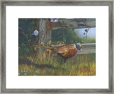 Ringneck Pheasant Framed Print by Jeff Brimley