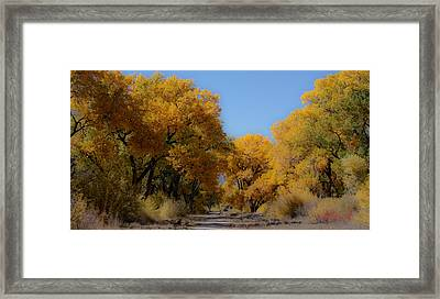 Rio Grande Cottonwoods Framed Print by Denice Breaux