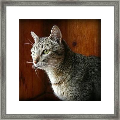 R.i.p. Kitty Kitty 6-11-12 <3 A.k.a Framed Print