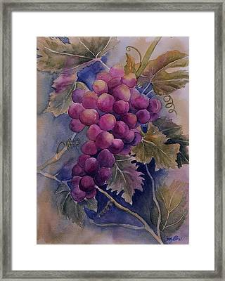 Ripening On The Vine Framed Print by Sandy Fisher