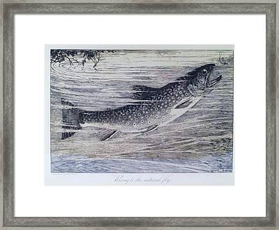 Rising To The Natural Fly Framed Print