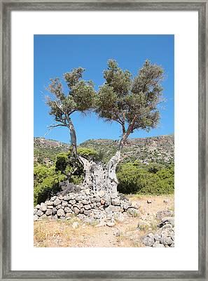 Riven Olive Framed Print by Paul Cowan