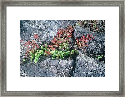 River Framed Print by Alcina Morello