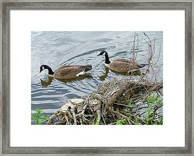 River Cruising Framed Print by Louise Peardon