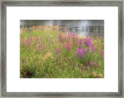 River Flowers Framed Print by Fred Russell