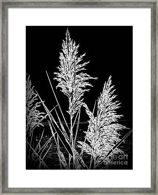 Framed Print featuring the photograph River Grass by Nancy Dole McGuigan
