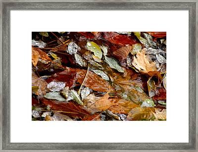 River Leaves Framed Print by LeeAnn McLaneGoetz McLaneGoetzStudioLLCcom