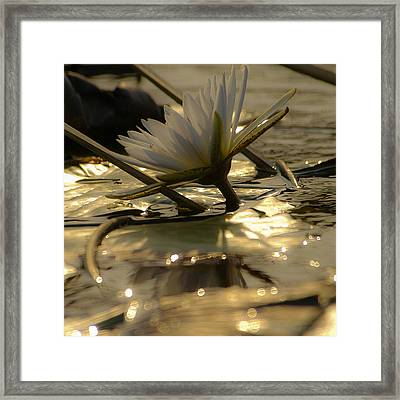 River Lily Framed Print