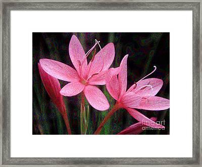 River Lily Framed Print by Yvonne Johnstone