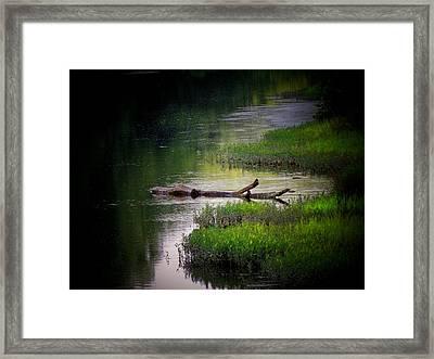 River Log Framed Print by Michael L Kimble