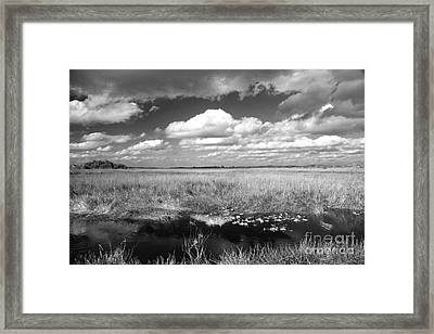 Framed Print featuring the photograph River Of Grass - The Everglades by Myrna Bradshaw