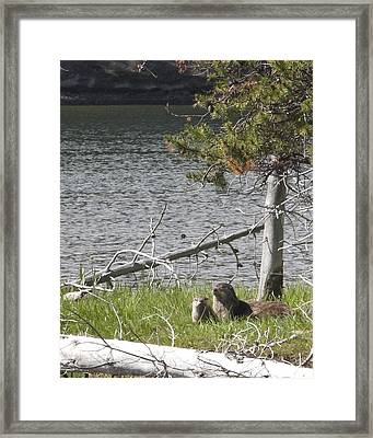 Framed Print featuring the photograph River Otter by Belinda Greb