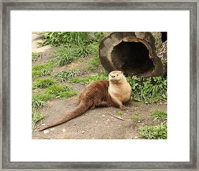 River Otter Framed Print