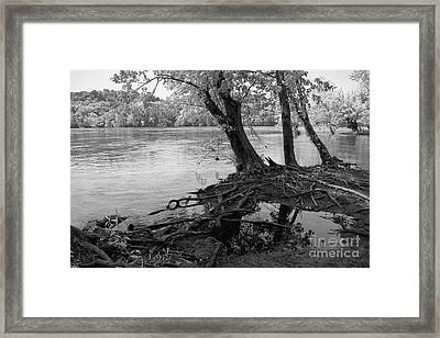 River-washed Roots Framed Print by Susan Isakson