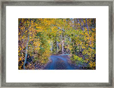 Road In The Fall Framed Print by Connie Cooper-Edwards