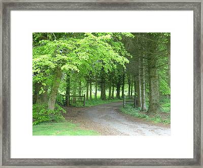 Framed Print featuring the photograph Road Into The Woods by Charles and Melisa Morrison