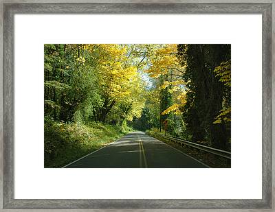 Road Through Autumn Framed Print